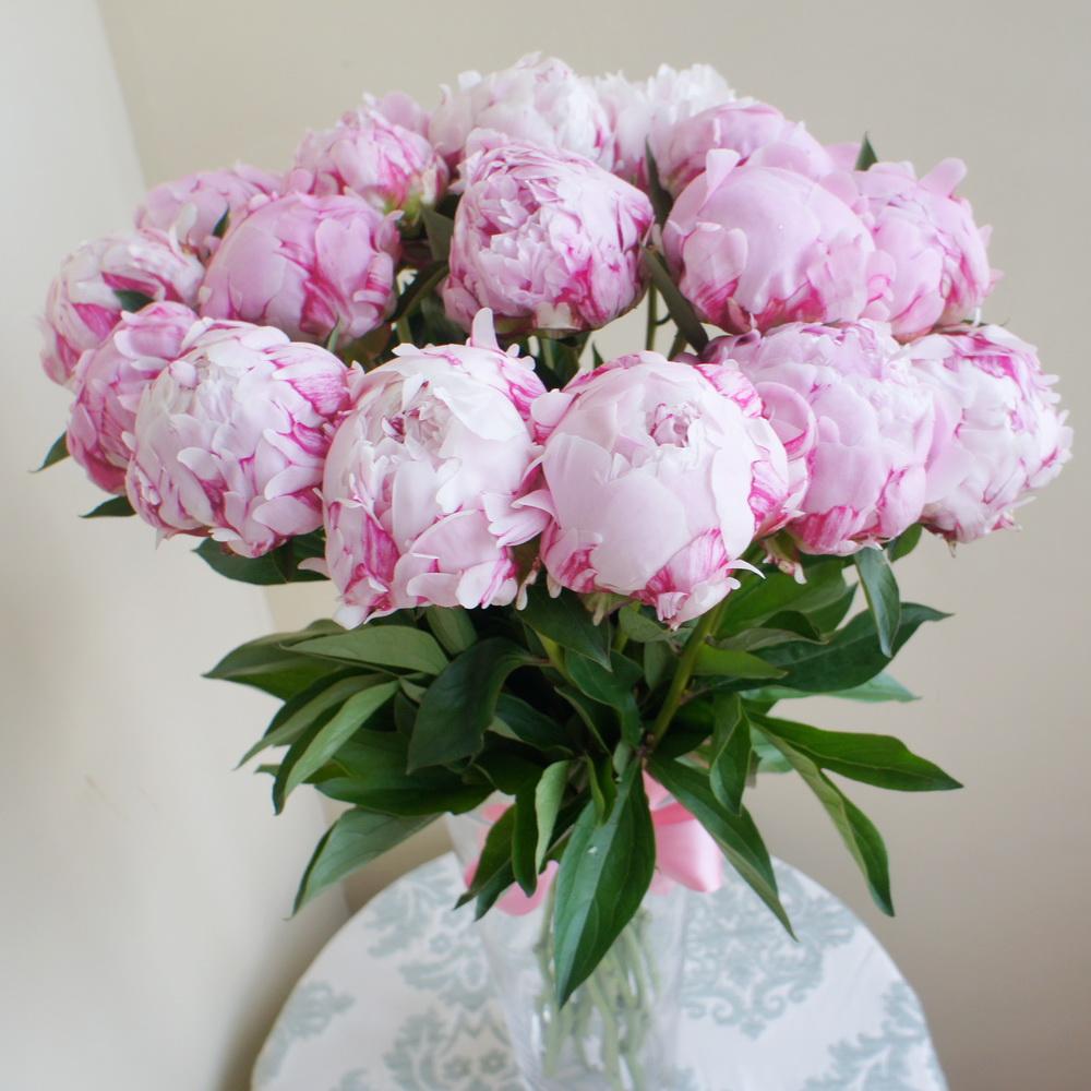 Пионы купить цветы в москве